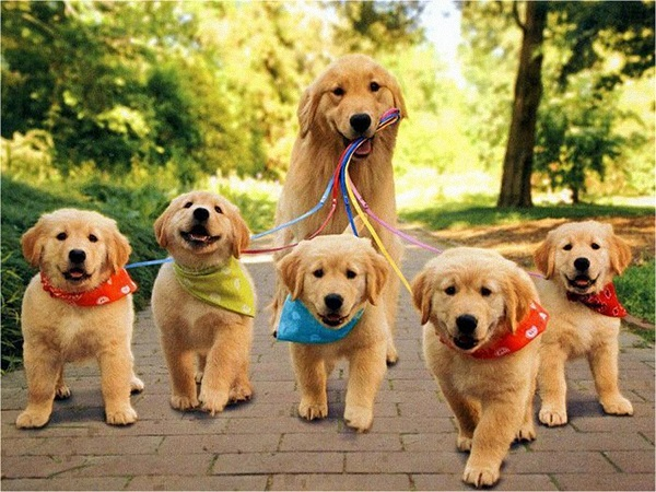 Walking Retrievers