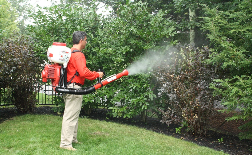 shrub insect control