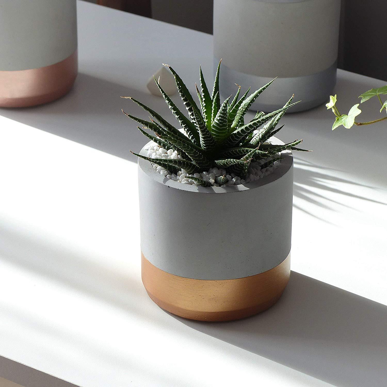 Concret Pots sunlight