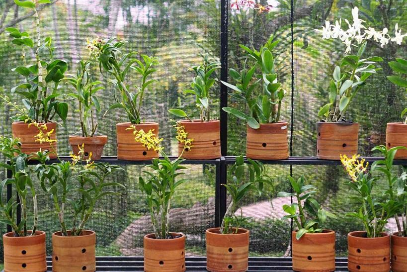 Wood Garden Planters